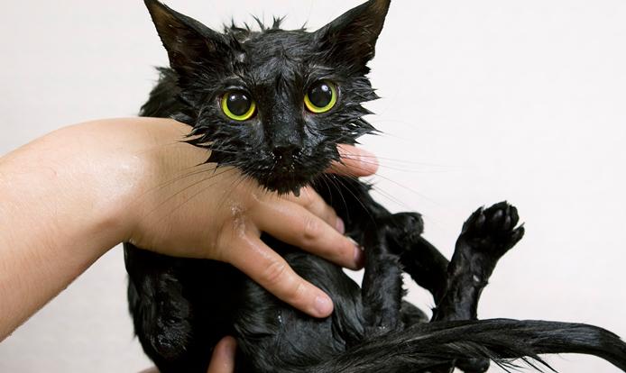 Aranyos fekete macska fürdés után